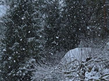 Tätt, tätt snöfall med skogen som bakgrund.