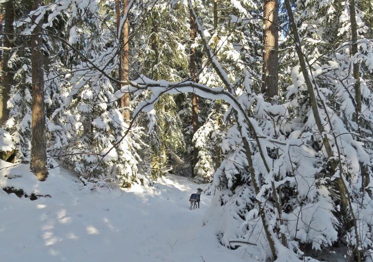 Liten Olle i stora skogen :)