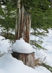 Stubbstolen har fått en dyna av snö :)