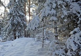 Tar stigen förbi vedboden och vidare genom skogen ...