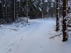Följer sedan den lilla skogsvägen - vänder mig om och fotar mina fotspår.