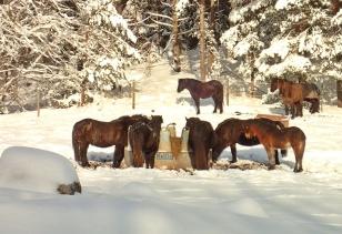 I hagen vid vägen njuter hästarna av frukost i solskenet :)