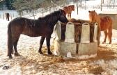 Stannar och hälsar på några andra hästar ...