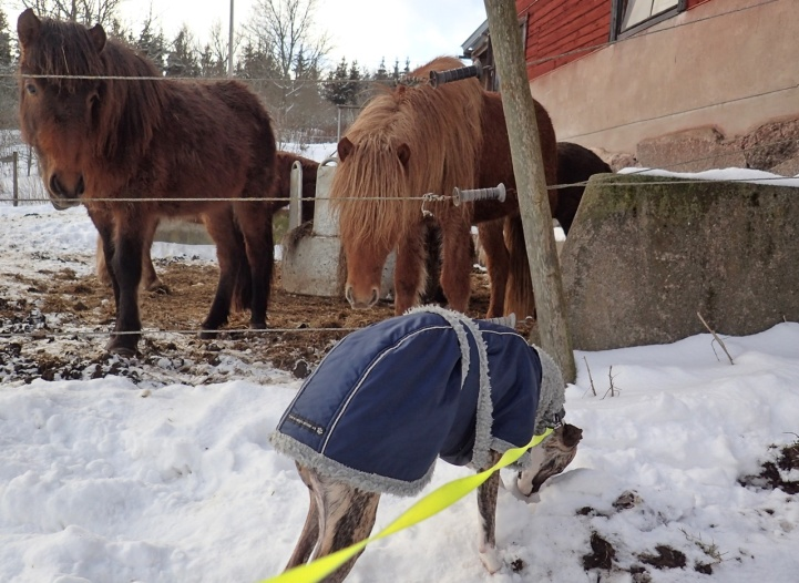 Olle tycker hästar är stora och läskiga och ville inte hälsa ...