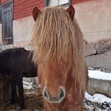 En av hästarna var mer intresserad av Olle än de andra.