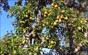... liksom päron ...