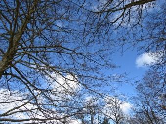 ... och uppåt - där var himlen blå.