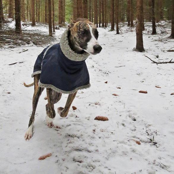 Olle behövde vinterjackan på förmiddagens promenad.