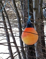 Ett annat fynd ... en fender i ett träd ...