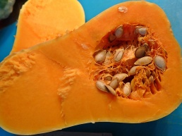 Pumpan är ingen grönsak som man kan tro, utan en frukt.