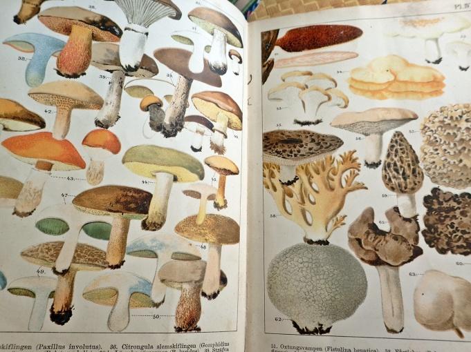 Precis som i Strömboms bok så är de enda bilderna de på pärmens insida ...