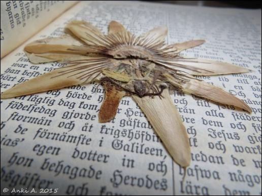 Inuti farmorsmors bibel ligger en pressad blomma ...