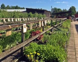 Massor med växter i långa rader och nya plattor i gångarna.