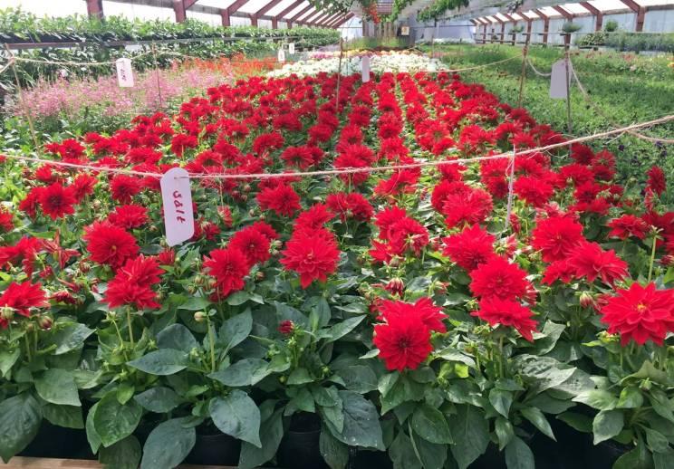 ... och röda - alla de röda här var redan sålda!