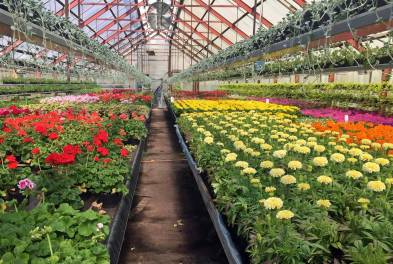24 maj, Eriksbergs plantskola. Mycket att välja på ...