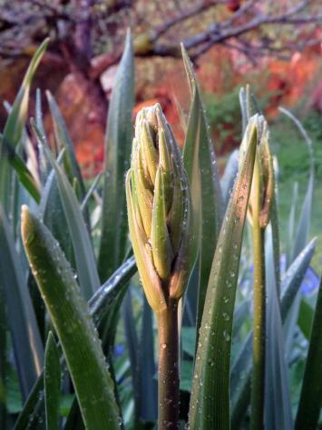 Blå blommor kommer snart att blomma här ...