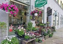 Härlig blomsterfägring utanför butiken på Skönbergagatan.