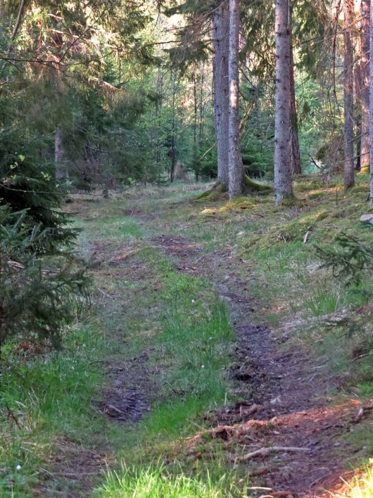 Den gamla vägen genom skogen ...