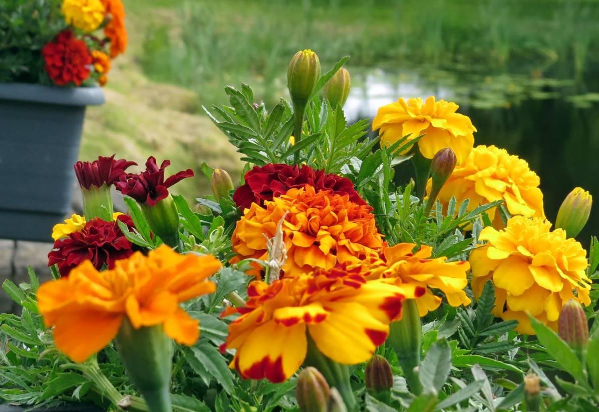 Fina blommor i blomlådorna på bron...