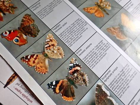 Visar både fram och baksida av fjärilarnas vingar ... Bra!
