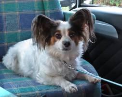 Fina Blinka hälsade på i husbilen.