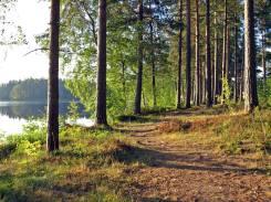 Stigen en sommarmorgon vid sjön