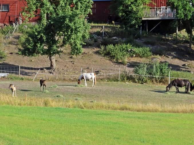 Går i motsatt riktning mot vad jag brukar, men zoomar in hästarna som går nedanför Granmyra gård.
