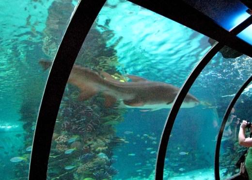 En usel bild, men faktiskt en slags tunnel under det jättelika akvariet med hajar ...
