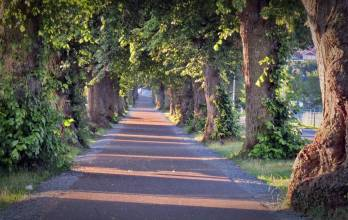 En allé kan också kännas som en tunnel - så skön att vandra i.