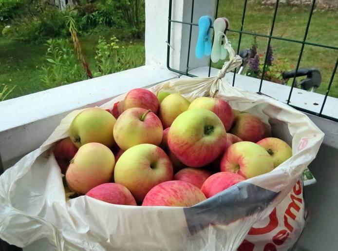 Härliga äpplen!