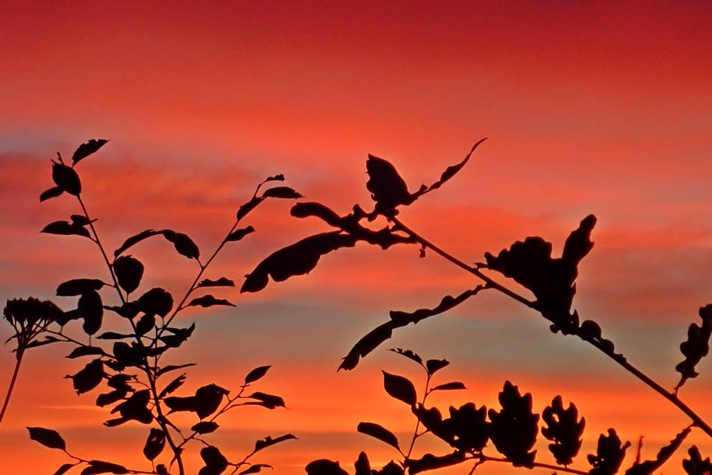 14 augusti. Fantastisk soluppgång!