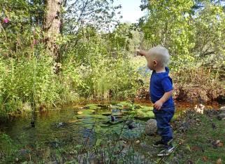 Charlie tittar på fjärilarna vid dammen ...