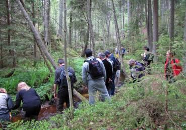 Folkvimmel i skogen