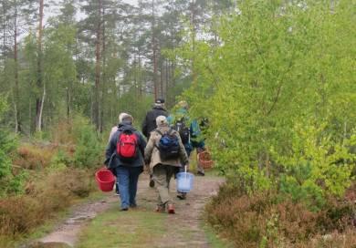 På väg mot svampskogen ...