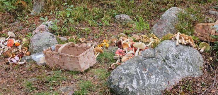 ... för att gruppera svamparna lite innan genomgång om vad som är vad ...