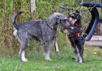 ... och glada hundar :)