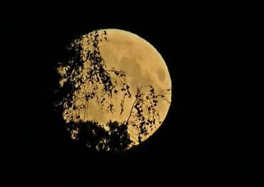 Hur jag än försökte så kom trädens grenar framför månen ...
