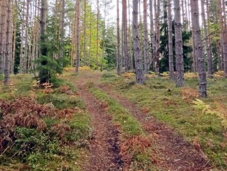 1 oktober. Den gamla skogsvägen ...