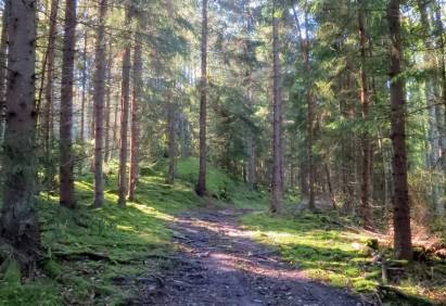 7 oktober. skogsvägen ...