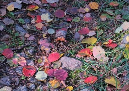 16 oktober. Färggranna löv på marken