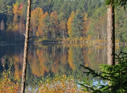 Sjön skymtar mellan träden ...