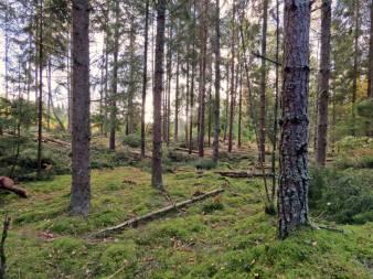 Ingen fara ... skogen finns kvar ...