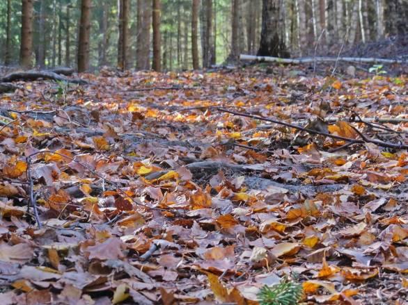 Skogsvägen är täckt av prasslande löv.