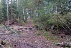 Nästan inget att snubbla över längs den lilla skogsvägen ...