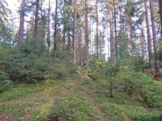 Min närmaste skog ... alla träden finns kvar :)