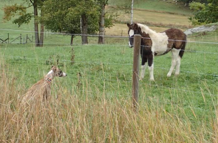 2 oktober. Både Olle och fölet är lite avvaktande ...