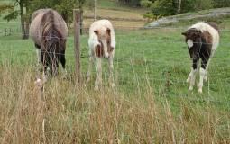 Olle är välkamouflerad och syns knappast i gräset ...