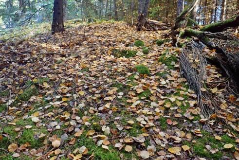 Löven faller ... höstkänsla ...
