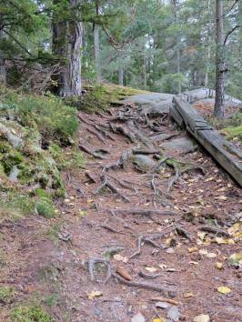 Stigen uppför berget ... mycket rötter är det ...