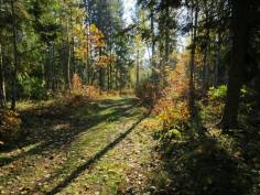 En vacker väg ... skogsvägen upp till den lilla sjön Veten.